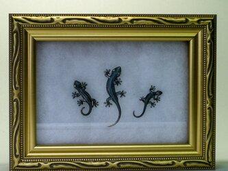 銀蟲細工 『守宮』アートボックスセットの画像