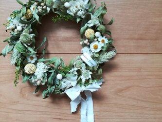 キンポウジュとフランネルフラワーのgreen wreathの画像