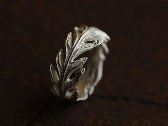 グレビレアアイバンホーの葉のリングの画像