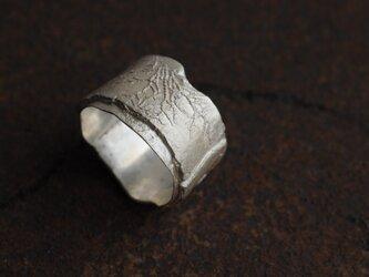 ハルニレの樹皮のリングの画像