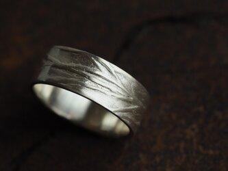 コスモスの葉のリングの画像