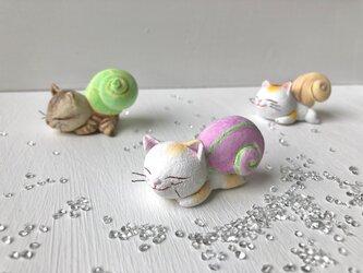 カタツムリ猫さん 白黄トラの画像