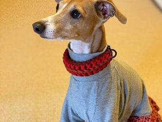 ウイペット、イタグレなど首の細い犬種用 バックルタイプ首輪 (内径24cm)の画像