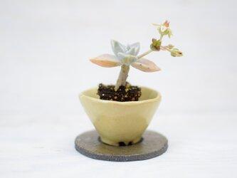 陶器鉢 8の画像