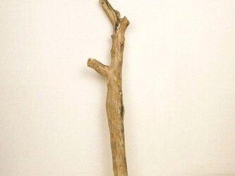 【温泉流木】ところどころに穴が開いているおもしろ流木枝 流木素材 インテリア素材 木材の画像