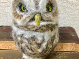 羊毛フェルトのコキンメフクロウの画像