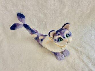 猫魚(6)の画像