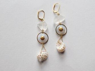 ヴィーナスの耳飾り~貝のピアス~の画像