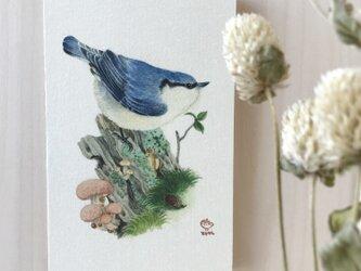 「ゴジュウカラとホシアンズタケ」の13x20cm パネルの画像