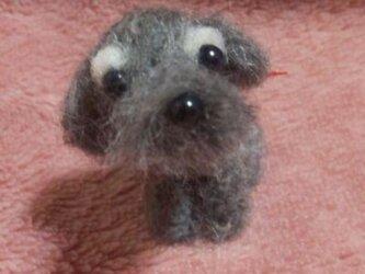 羊毛フェルト シュナウザーの画像