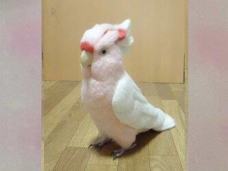 ライフサイズ  1/1サイズ:クルマサカオウム 受注作成 羊毛フェルト 鳥のオブジェ リアルバード 羊毛インコフィギュアの画像
