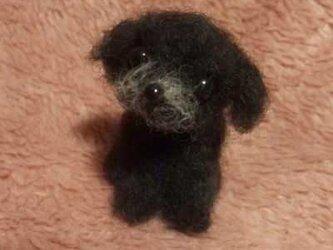 〔受注製作〕羊毛フェルトハンドメイド トイプードルの画像