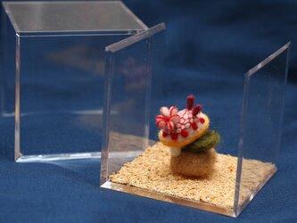 サラサウミウシのおうちの画像