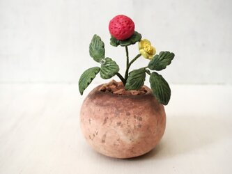 3793.bud 粘土の鉢植え ヘビイチゴの画像