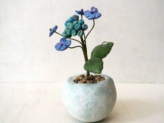 3800.bud 粘土の鉢植え ガクアジサイの画像
