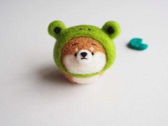 【受注製作】なりきりカエルのまゆ柴犬(赤柴・黒柴・白柴)  羊毛フェルト(アクレーヌ)の画像