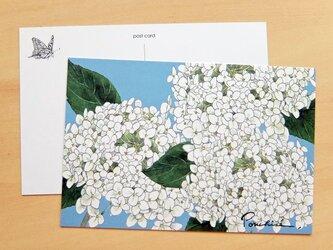 ポストカード 紫陽花の画像