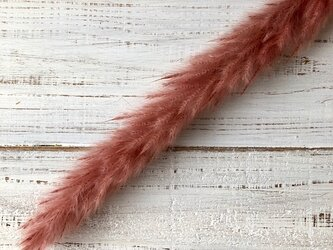 テールリード 1本 アンティークピンク ドライフラワー花材 そのままインテリアやスワッグ 撮影小道具などにの画像