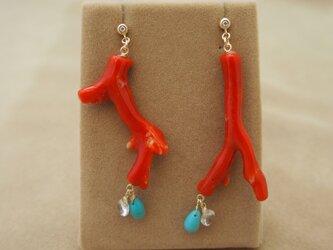赤枝珊瑚 デザインピアスの画像