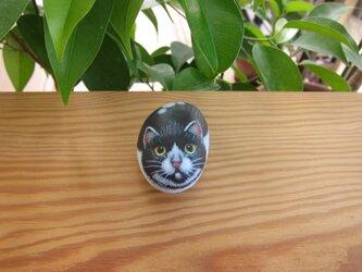 石猫(小MK)の画像