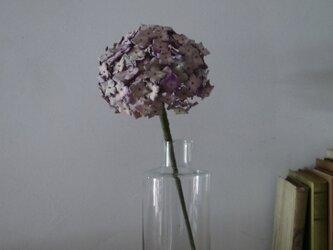 革花の紫陽花の画像
