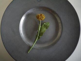 花便り・タンポポの画像