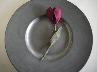 花便り・チューリップの画像