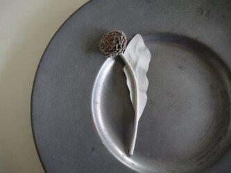 花便り・タンポポ(ホワイト)の画像
