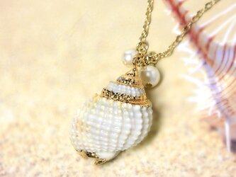 貝殻チェーンネックレスの画像
