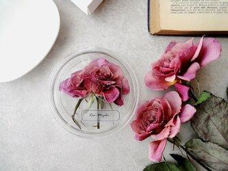 植物標本 ■シャーレ仕立て■和薔薇 雅の画像