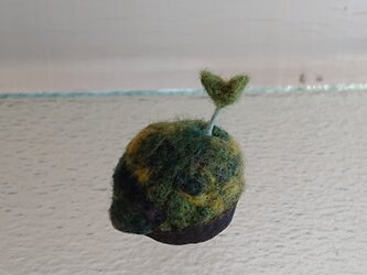羊毛で作ったクルミの芽の画像