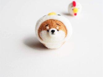 【受注製作】なりきりにわとりのまゆ柴犬(赤柴・黒柴・白柴)  羊毛フェルト(アクレーヌ)の画像