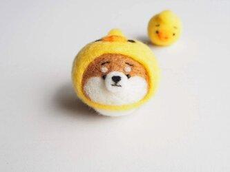 【受注製作】なりきりひよこのまゆ柴犬(赤柴・黒柴・白柴)  羊毛フェルト(アクレーヌ)の画像