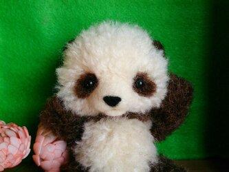 子パンダの画像
