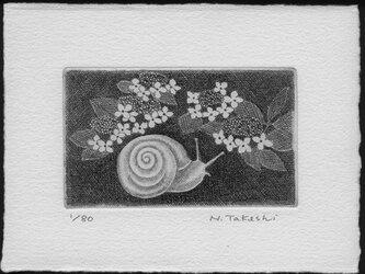 かたつむりと紫陽花/ 銅版画 (作品のみ)の画像