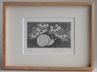 かたつむりと紫陽花/ 銅版画 (額あり)の画像