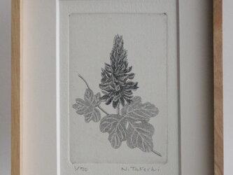 くずの花/ 銅版画 (額あり)の画像