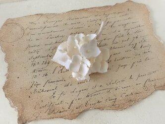 染め花の紫陽花のポニーフック(オフホワイト)の画像