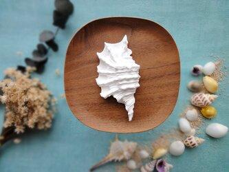 アロマストーン  ■ クモガイ 巻貝 ■ 6種類から香りが選べるの画像