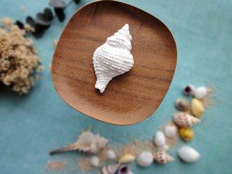 アロマストーン ■  アヤボラ 巻貝 ■ 6種類から香りが選べるの画像