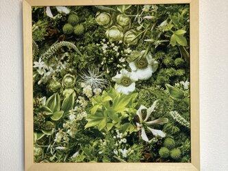 超軽量 アートパネル 草柄の画像