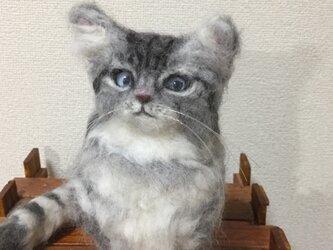 期間限定セール☆羊毛フェルトのラガマフィン子猫の画像