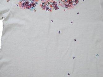襟もとに桜の画像
