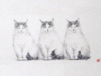 《ねこ三兄弟》の画像