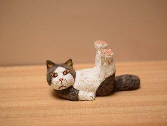 ネコのストレッチたま。の画像