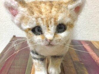 羊毛フェルトのスナネコ赤ちゃんの画像