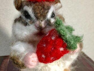 イチゴを食べるシマリスの画像