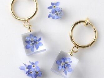 勿忘草のイヤリング(無料ギフトラッピング, 誕生日プレゼント, メッセージカード)の画像
