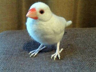 [再販]asae** 文鳥グッズ(羊毛フェルト)白文鳥の画像