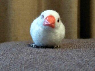[再販]asae** 文鳥グッズ(羊毛フェルト)おすわり白文鳥の画像